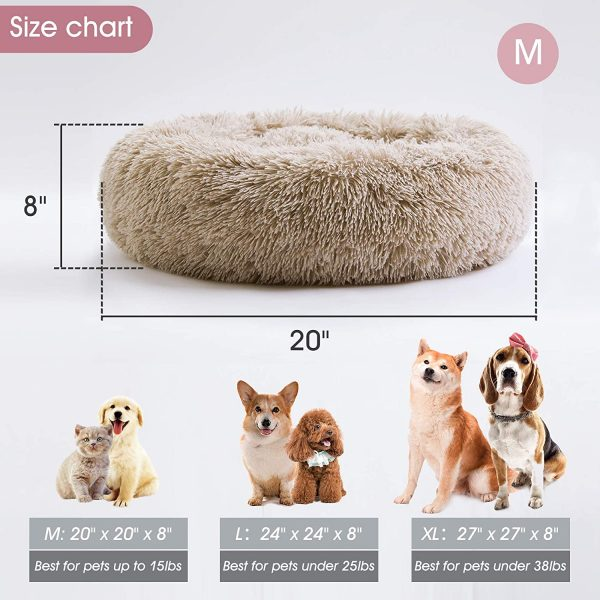dog beds for dogs