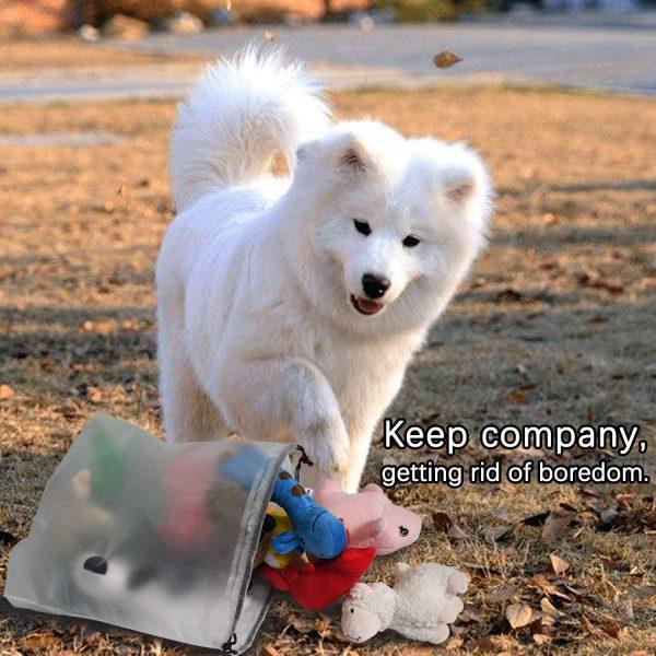 dog toy pk